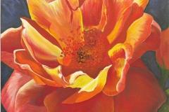 Rose Splendour